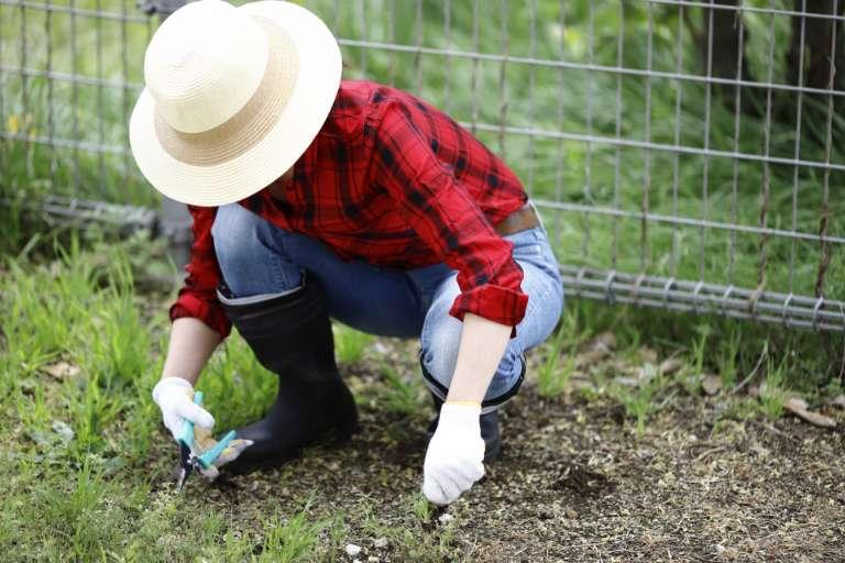 作業風景の画像(草刈り)